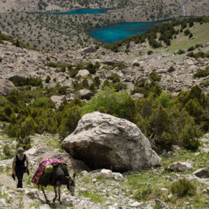 The donkey for trekking Tajikistan Alaudin Lakes