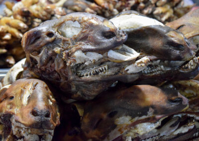 Food at Kashgar's night market: sheep head
